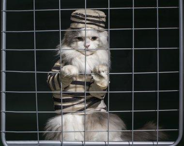cat criminal behind bars