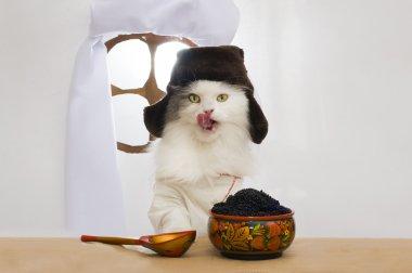 Russian cat eats caviar
