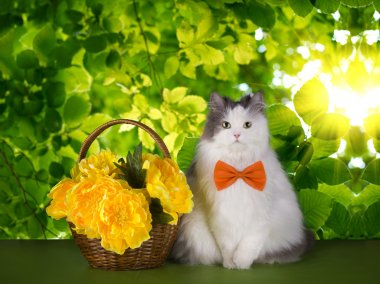 cat with spring flowers on a background of green leaves