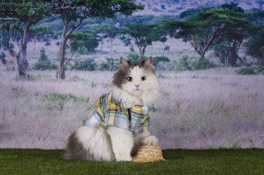 cat travels in Africa safari