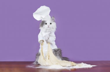 cat kneads dough in a suit chef