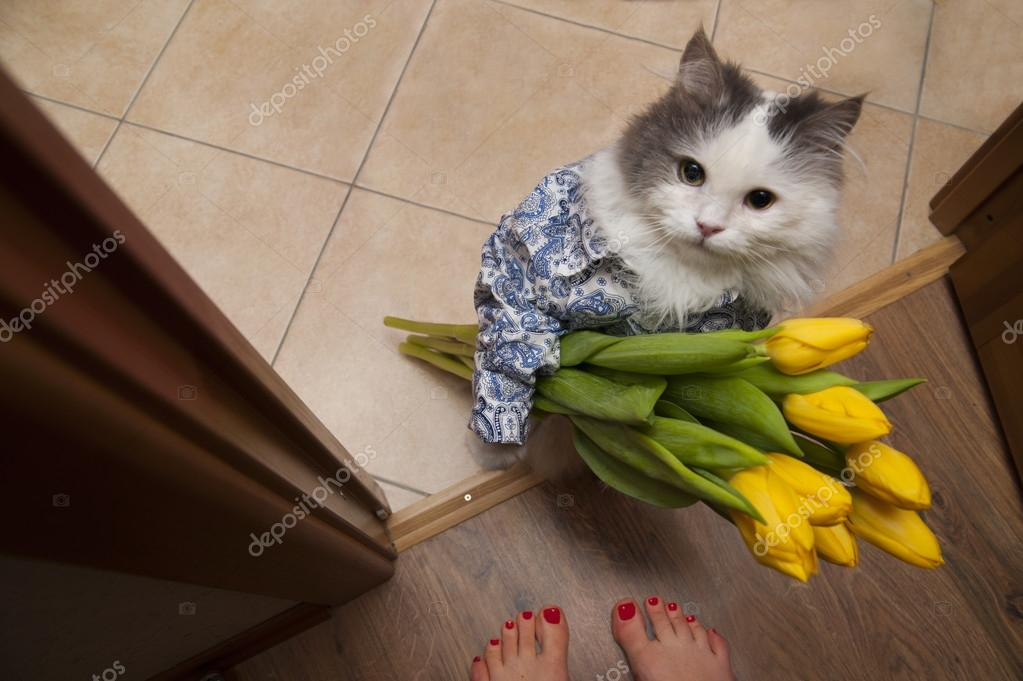 Gatto con un mazzo di fiori ai piedi della padrona foto for Piani domestici di 2000 piedi quadrati