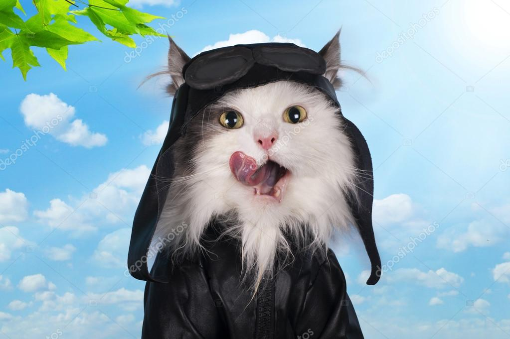 cat in a suit against the sky pilot