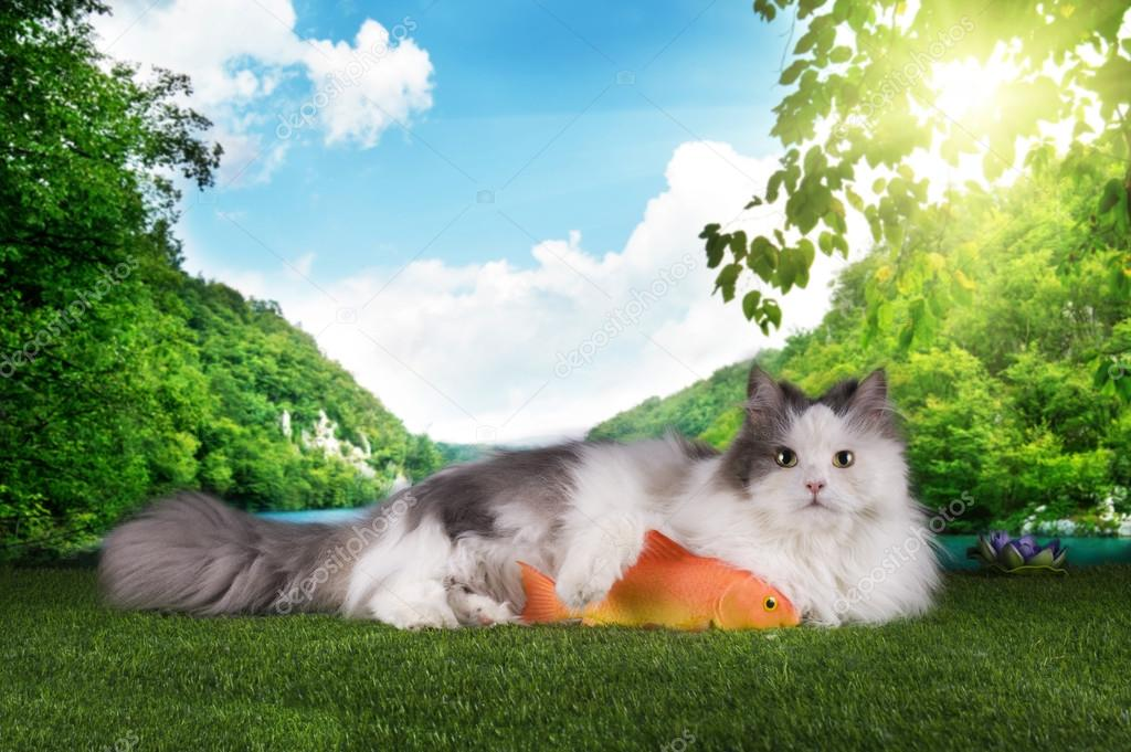 cat resting after successful fishing on the grass
