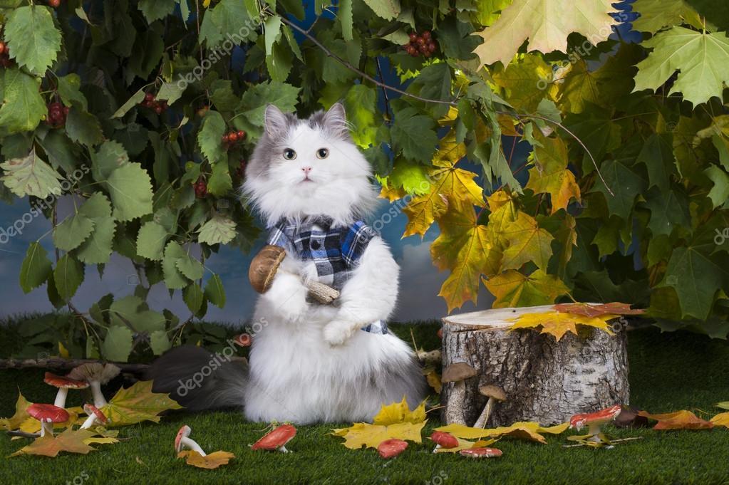 Грибы кошки. Кошка грибы в лесу — Стоковое фото © kuban ...
