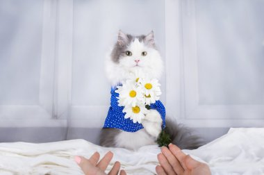 cat with a bouquet of daisies in the morning wakes owner