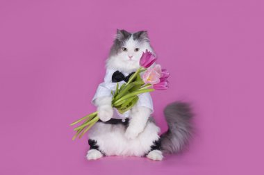 cat with a bouquet of pink tulips
