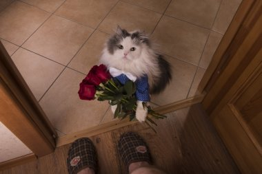 cat brought roses as a gift to his mom