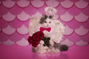 cat with angel wings and a bouquet of roses congratulates with v