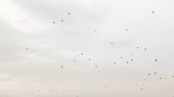 hejno ptáků, kteří létali vysoko na obloze