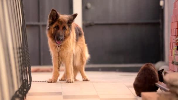 Pes a kočka v zahradě v obci