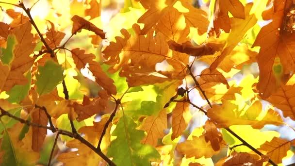 Dubové listí v podzimních barvách přestěhoval můj vítr