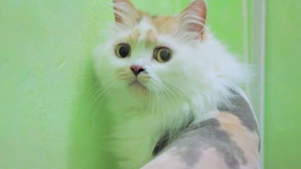 videa oholené kočičky slavné anime porno