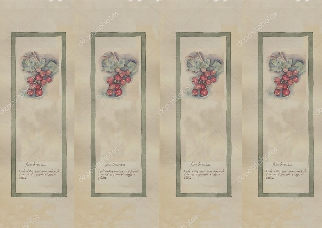 Hand drawn watercolor painting decorative -Ribes Grossularia