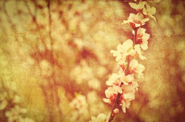 postcard of spring bloom