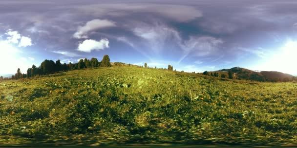 UHD 4K 360 VR timelapse zeleného horského lesa. Sluneční paprsky a stíny, tráva a borovice.