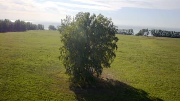 Anténa: letu nad krásné zelené strom na zlaté letní pole