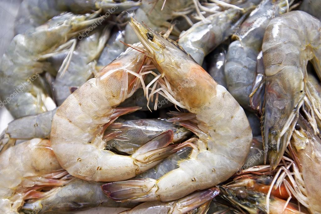 Giant freshwater prawn — Stock Photo © lobster20 #92625444