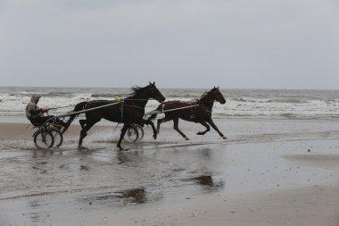 Horse training race on the beach