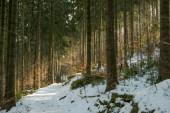 Fotografie Beautiful winter forest