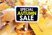 lackboard-különleges őszi eladó