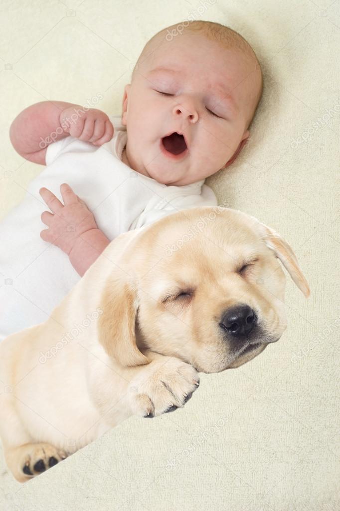 baby and puppy labrador stock photo gurinaleksandr 105350936