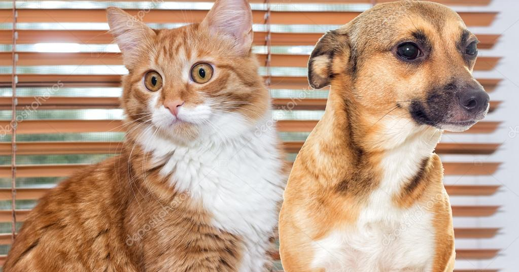 Gatto Rosso E Cucciolo Sulla Finestra Foto Stock Gurinaleksandr