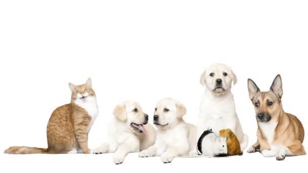 Cane E Gatto E Roditori Su Sfondo Bianco Video Stock