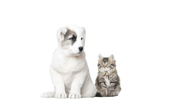 Gatto E Cane Su Sfondo Bianco Video Stock Gurinaleksandr 114994820