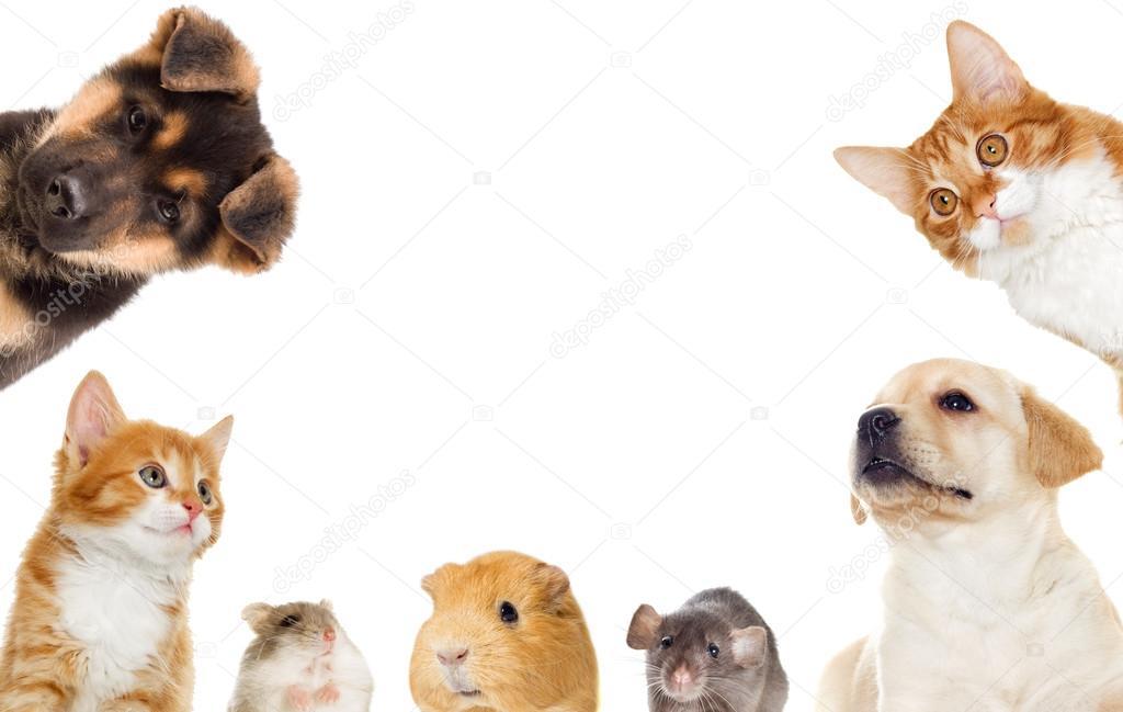 Insieme Di Animali Domestici Foto Stock Gurinaleksandr 120131610