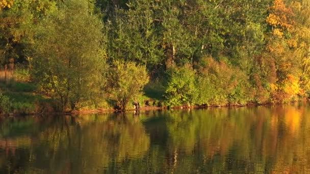 Podzimní krajina s lesy a jezera