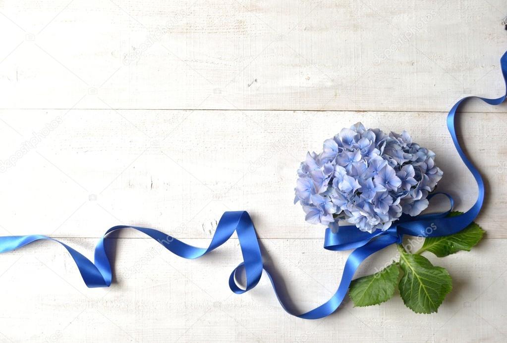 Blaue Hortensie Mit Band Stockfoto C Yonibunga 73524809
