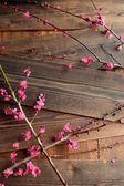 Červené květy ume (japonská Meruňka) na černé dřevěné kance