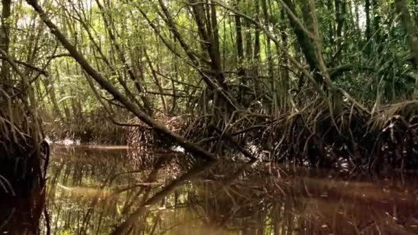 Mangrove river in natural jungle in Malaysia
