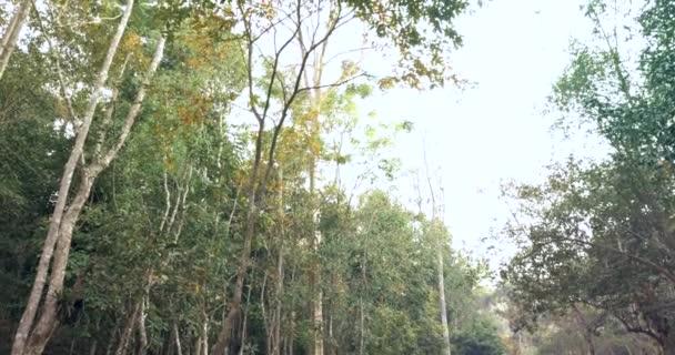 tropický les v Thajsku
