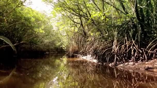 Mangrovové řeka v přirozenou džungli v Malajsii