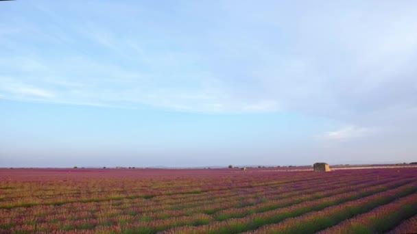 Západ slunce nad levandule pole