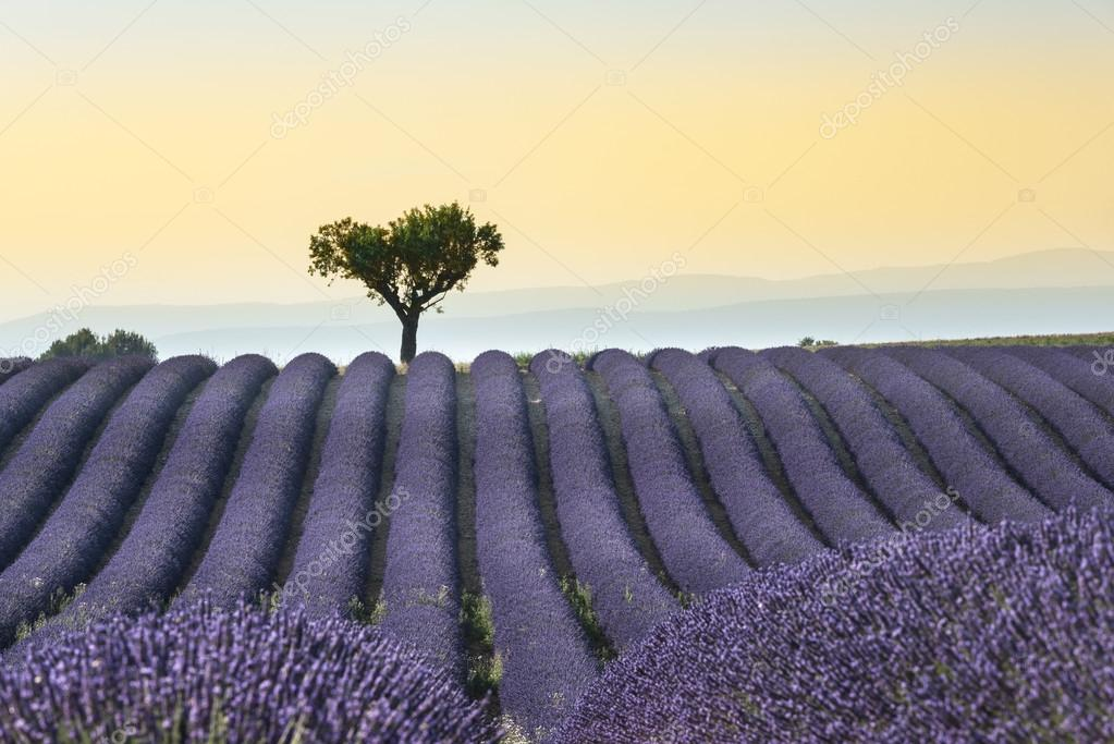 Фотообои Lavender field Summer sunset landscape
