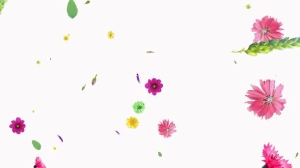 Animation verschiedener Farben auf weißem Hintergrund. Feld, Kornblumen drehen, Größe ändern. Sturz von oben. Dekorative Postkarte. Bildschirmschoner. Hintergrund. pattern.interface.generation