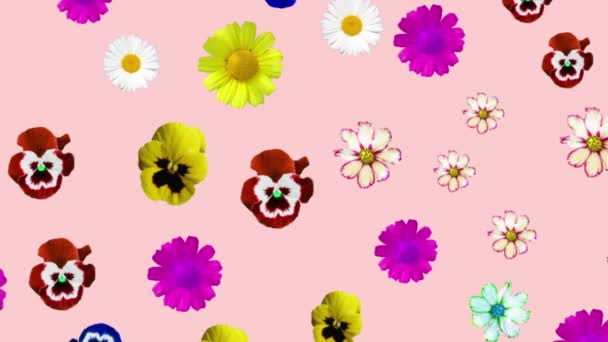 generated animation of various colors on a pink background. colored daisies, pansies spinning, changing size. fill the frame. Decorative postcard, headband, cutout, letterhead, design