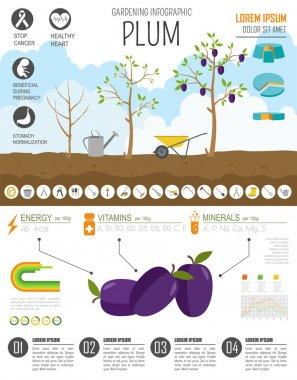 Gardening work, farming infographic. Plum. Graphic template