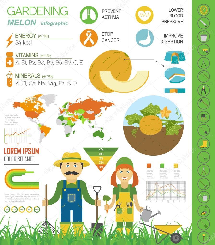 Gartenbau-Arbeit, Landwirtschaft Infographik. Melone. Grafik Vorlage ...