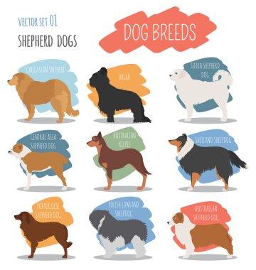 Dog breeds. Shepherd dog set icon. Flat style