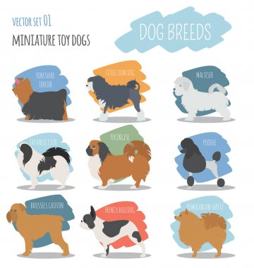 Dog breeds. Miniature toy dog set icon. Flat style