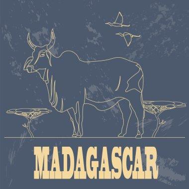 Madagascar. National symbol zebu. Retro styled image.