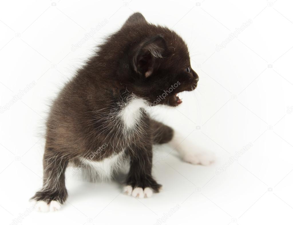 μαύρο μωρό μουνί