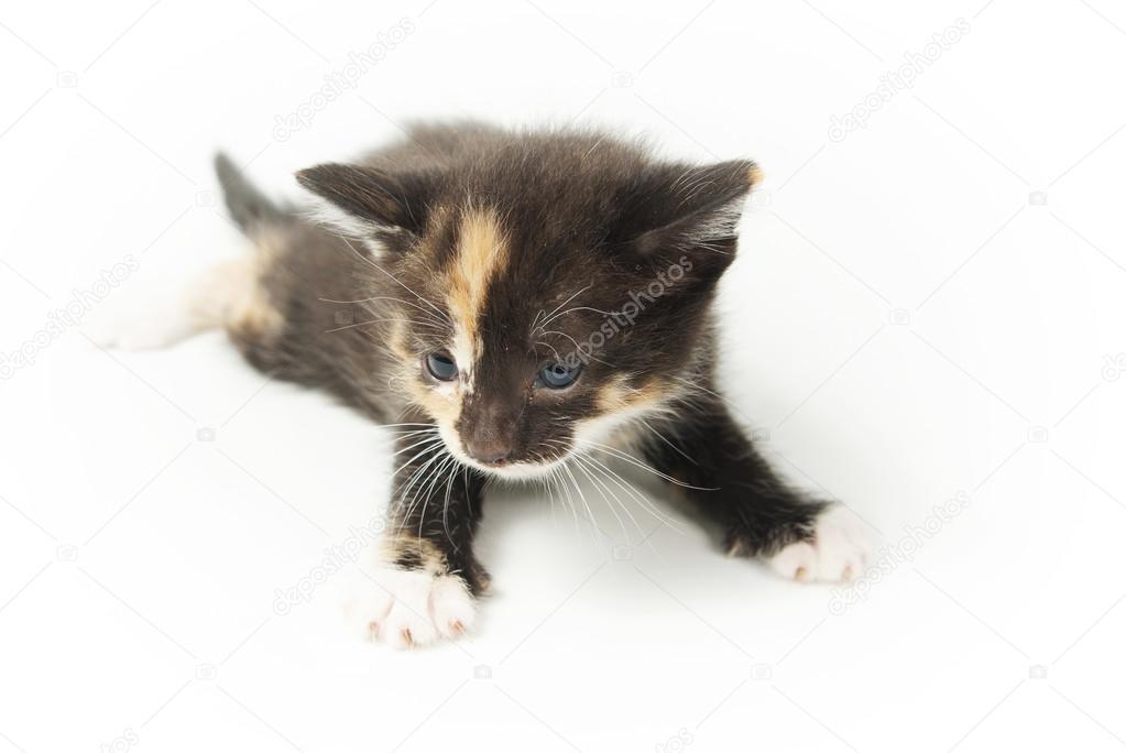 yuong kočička fotky