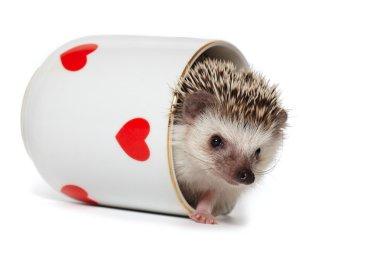 Funny hedgehog plays hide and seek