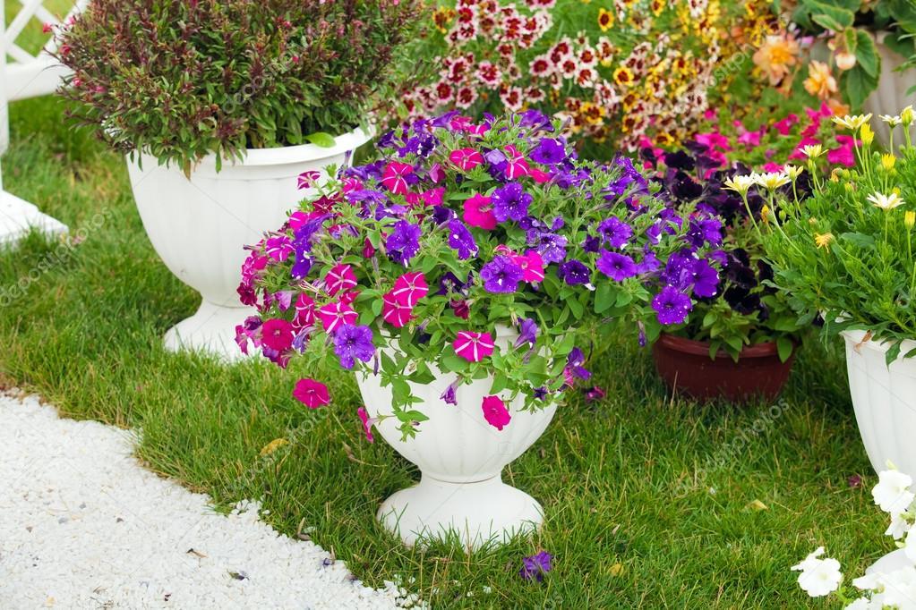 Flores de diferentes colores en macetas foto de stock for Fotos de plantas en macetas
