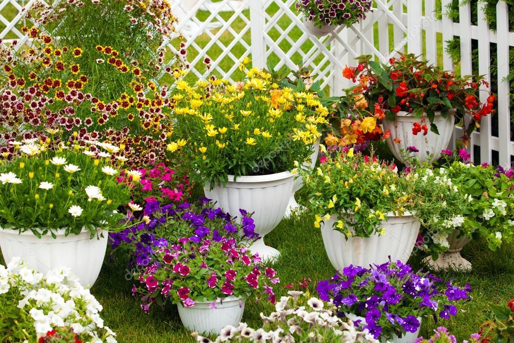Flores de diferentes colores en macetas Fotos de Stock